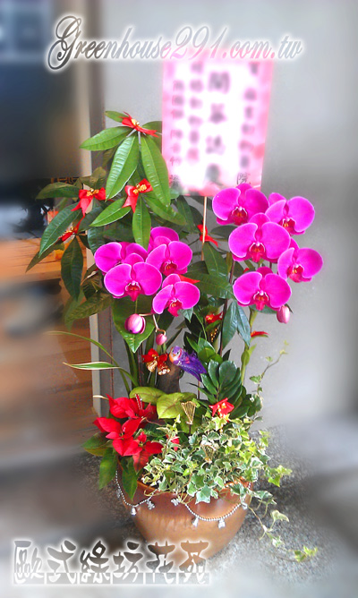 【gtco220】蝴蝶兰造型组合盆景 - 欧式绿坊花苑~~.
